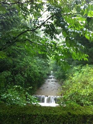 수목원의 나무 숲 사이로 흐르는 물줄기